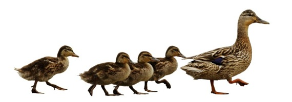 Lessons Learned in Leadership: Some Insight from a Follower